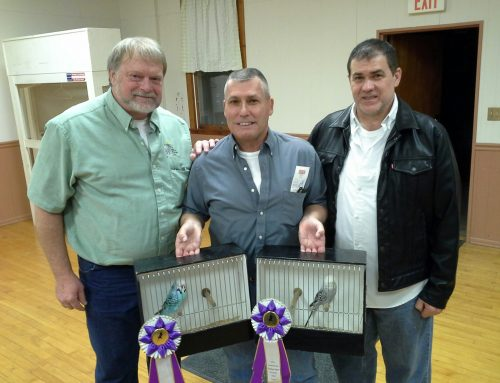 Best Intermediate winner both shows Duane Walton with Judges Mike Dahl and John Laborda Monee, Il. Nov 4, 2017